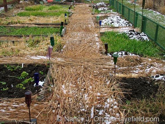 The veg garden at Hayefield late December 2012