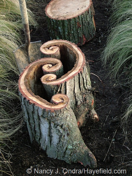 Log path detail at Hayefield