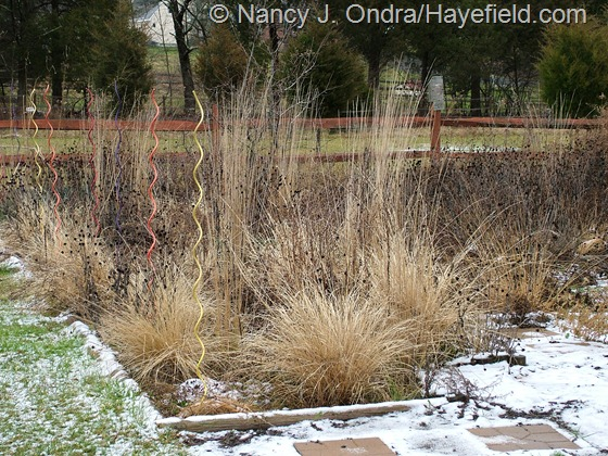 Pennisetum alopecuroides 'Cassian' with Calamagrostis x acutiflora 'Karl Forester' in perennial meadow at Hayefield