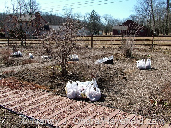 Bags o' bulbs ready for planting in front garden at Hayefield.com