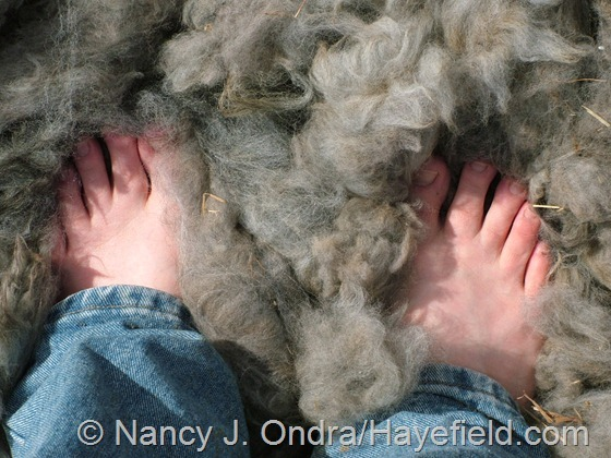 Alpaca fleece path at Hayefield.com
