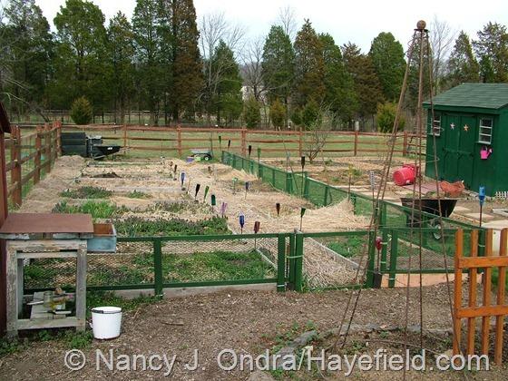 Veg garden at Hayefield