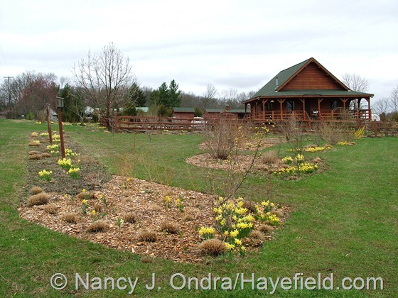 Expanded planting beds in shrubbery at Hayefield