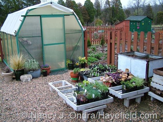 Nursery area at Hayefield