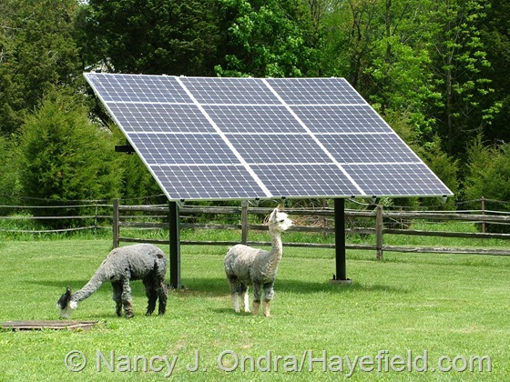 Ground-mounted solar panels mounted on an adjustable rack at Hayefield.com