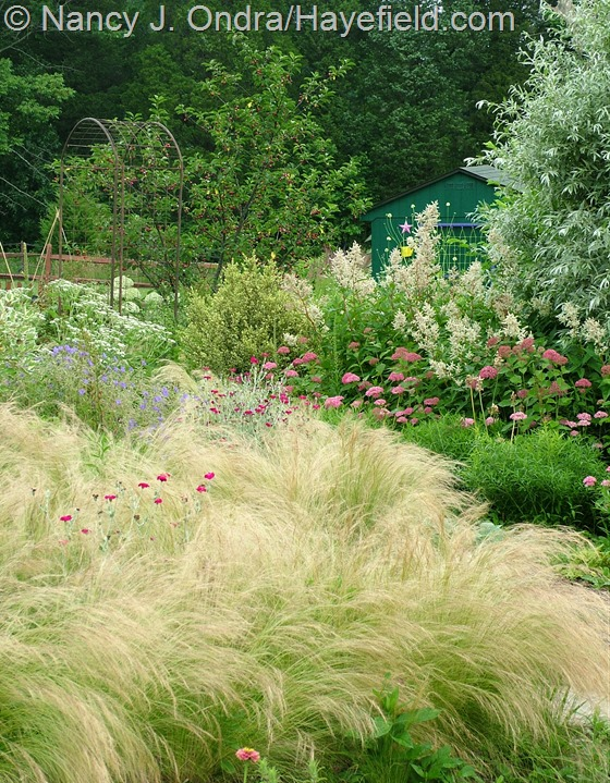 Side garden with Stipa tenuissima at Hayefield.com