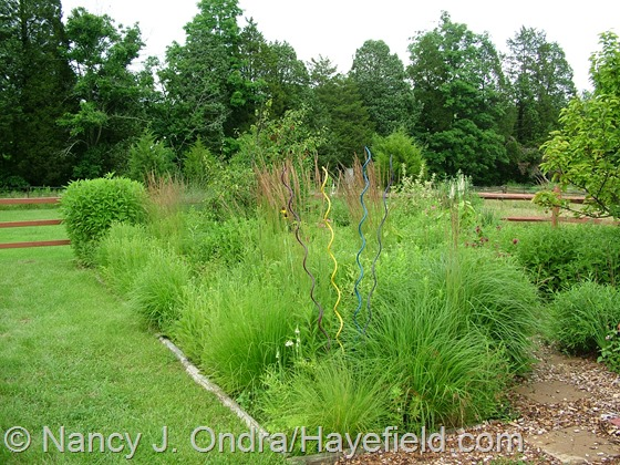 Perennial meadows at Hayefield,com