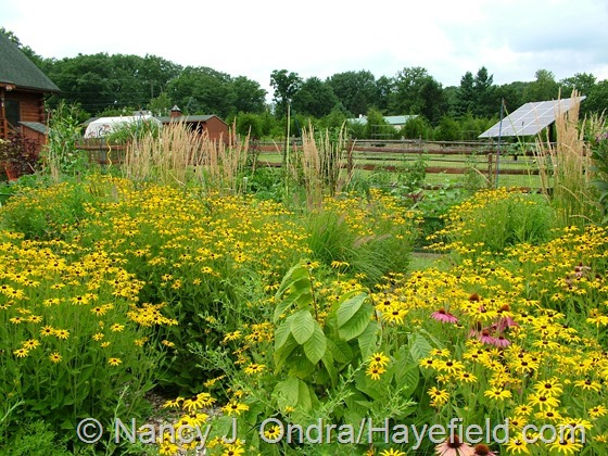 Perennial meadow at Hayefield.com