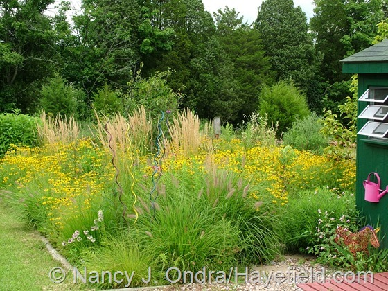 Perennial meadow area at Hayefield.com