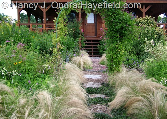 Stipa tenuissima in side garden at Hayefield.com