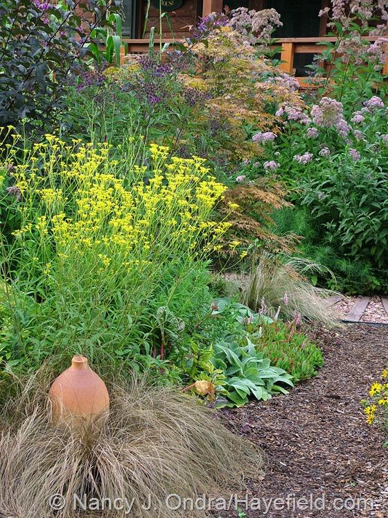 Patrinia scabiosifolia with Carex 'Toffee Twist' at Hayefield.com