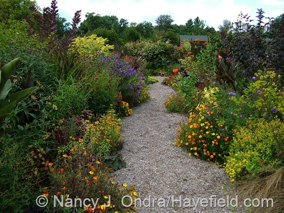 Front garden middle path at Hayefield.com