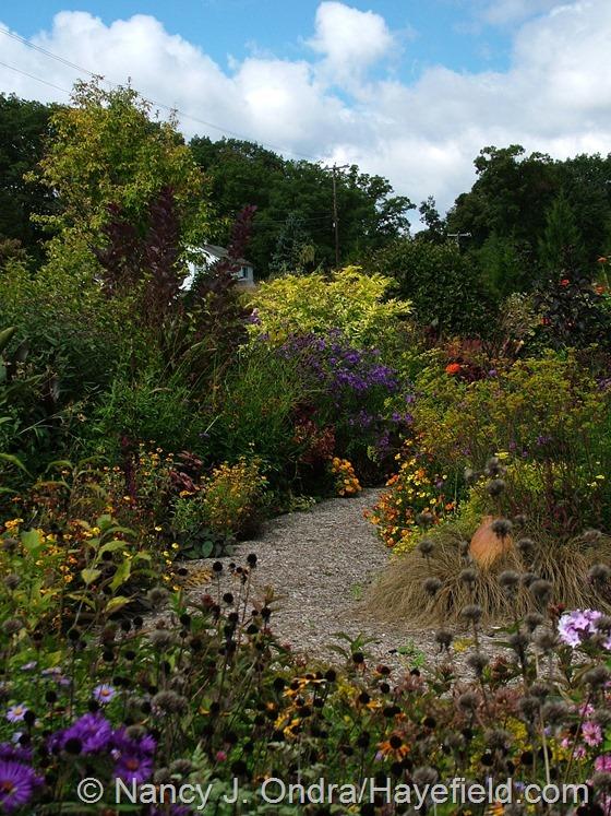 Front garden at Hayefield.com