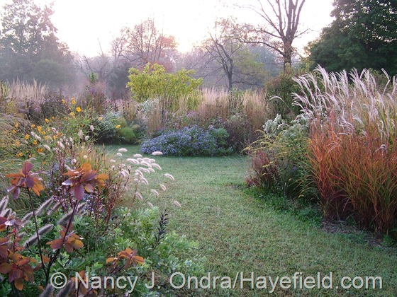 Fall color in The Shrubbery at Hayefield.com