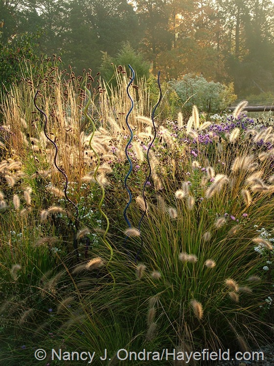 Perennial meadow with Pennisetum alopecuroides 'Cassian' and Calamagrostis x acutiflora 'Karl Foerster' at Hayefield.com
