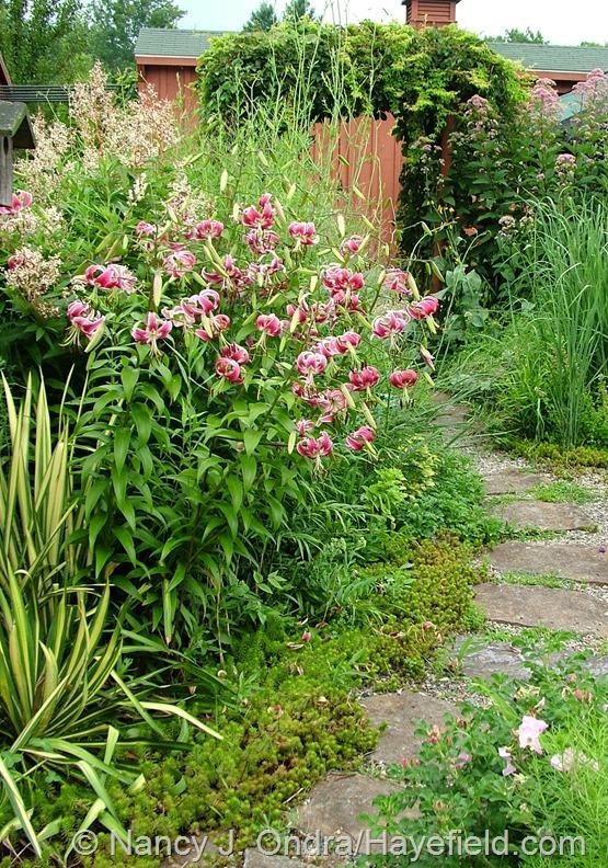 Courtyard: July 28, 2013 at Hayefield.com