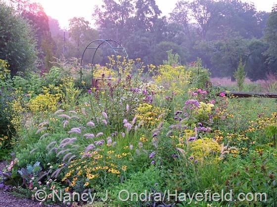 Side Garden: August 28, 2013 at Hayefield.com
