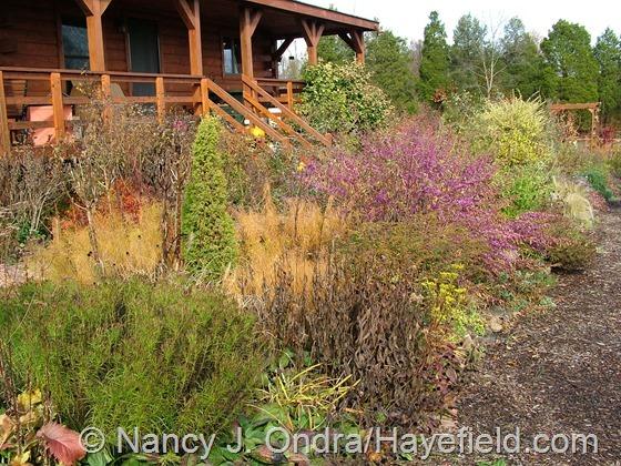 Side Garden: November 1, 2013 at Hayefield.com