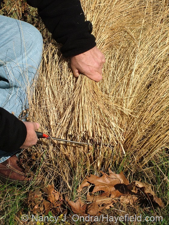 Using Jakoti hand shears to cut down ornamental grasses at Hayefield.com