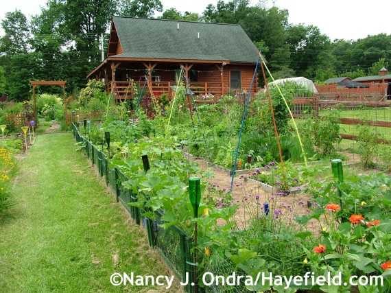 The veg garden at Hayefield.com