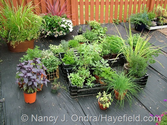 Plants Waiting for Homes at Hayefield.com