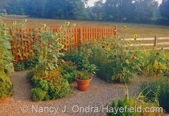 Kitchen garden at Hayefield.com August 2002