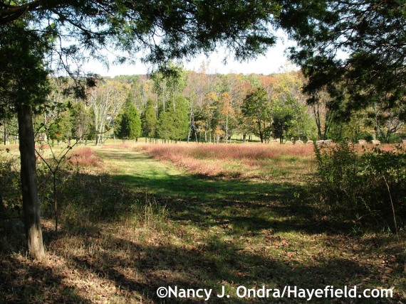 Fall color at the farm - Hayefield.com