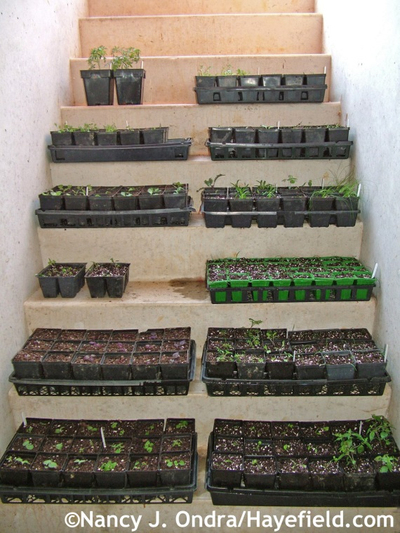 Seedlings at Hayefield.com