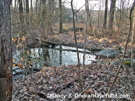 Vernal pool at farm mid-April 2014
