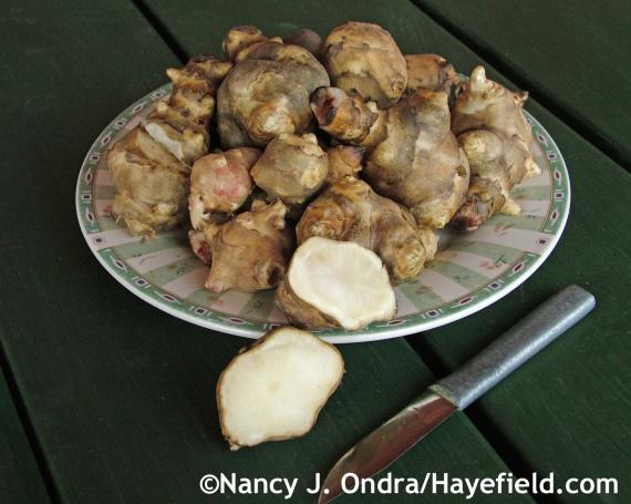 Jerusalem artichokes (Helianthus tuberosus) at Hayefield.com