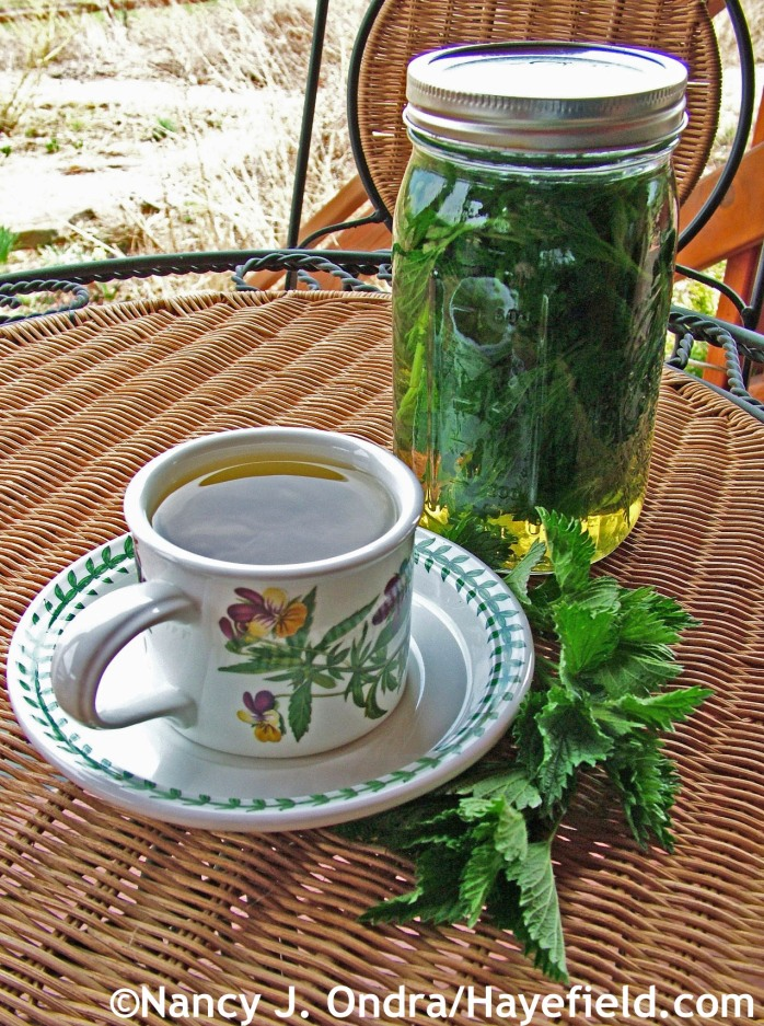Stinging nettle infusion at Hayefield.com