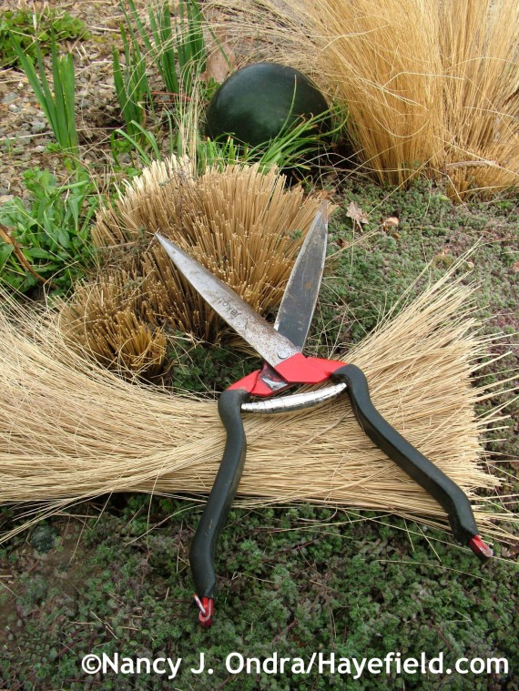 Jakoti Hand Shears with Stipa tenuissima at Hayefield.com