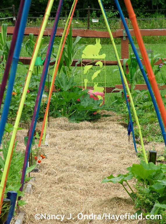 Painted bamboo arches in veg garden at Hayefield.com