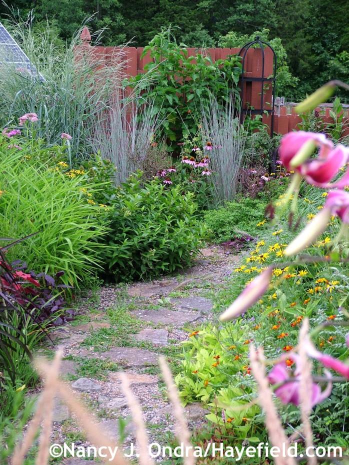 Courtyard garden with Echinacea purpurea and Schizachyrium scoparium 'The Blues' at Hayefield.com