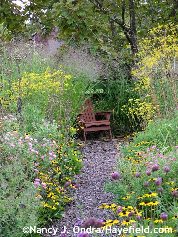 Bench framed by Patrinia scabiosifolia, Solidago, and Panicum virgatum 'Dallas Blues' at Hayefield.com