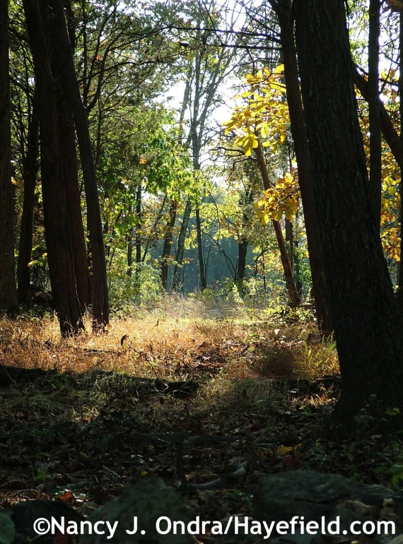 Woods path at the farm - Hayefield.com