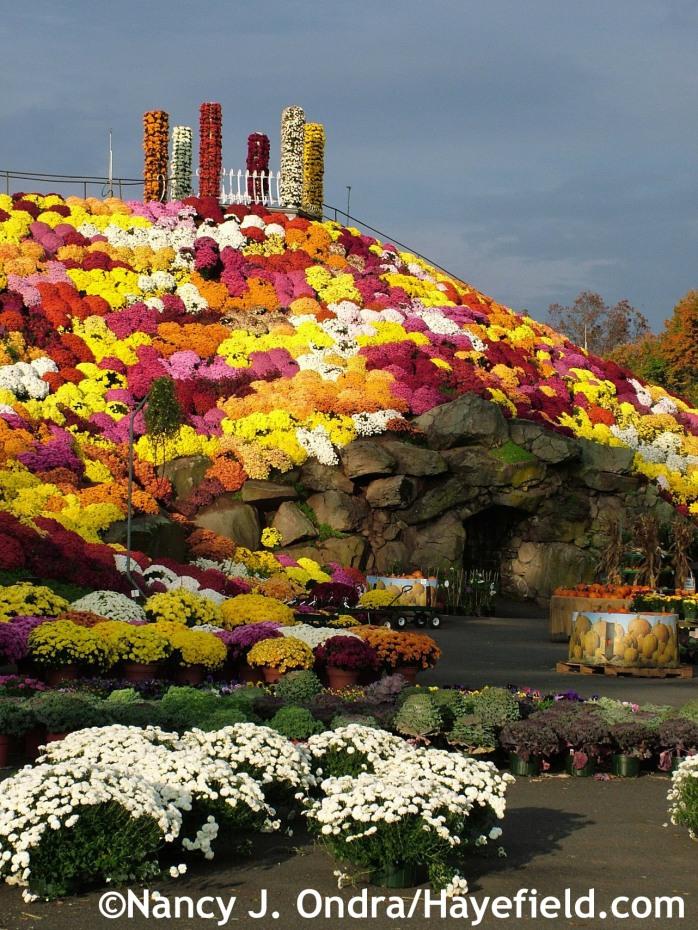Mum Mountain at Ott's Exotic Plants in Schwenksville, PA mid-October 2007
