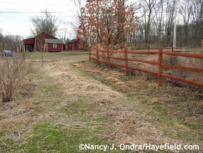Easter Border after mowing and raking (early April 2014) at Hayefield.com