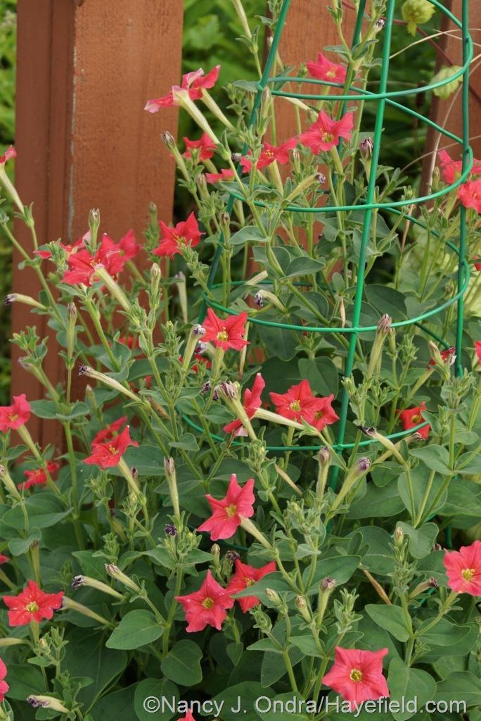 Garden Bloggers' Bloom Day – July 2014 | Hayefield
