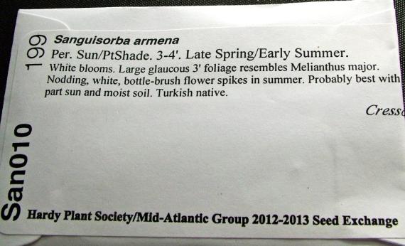 Sanguisorba armena seed packet from HPS/MAG Seed Exchange