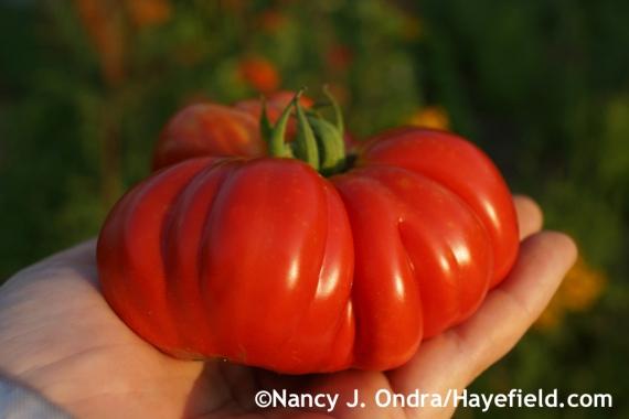 'Puszta Kolosz' tomato (gorgeous, but had little flavor) at Hayefield.com
