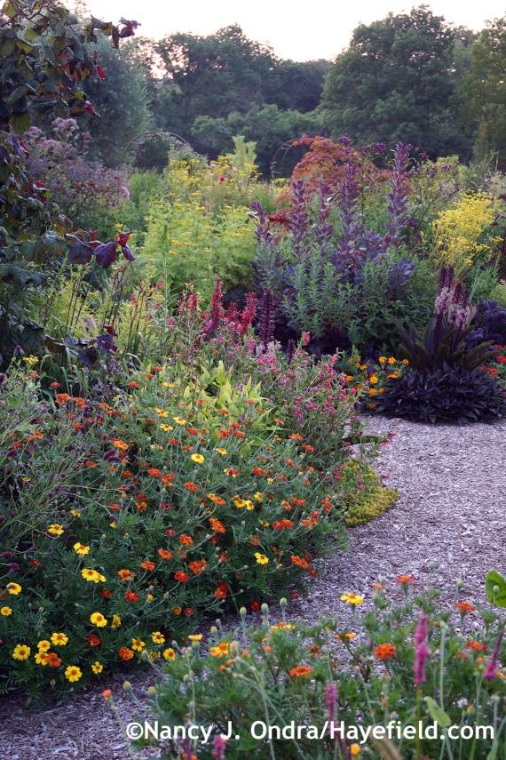 Front Garden ~ August 9, 2014