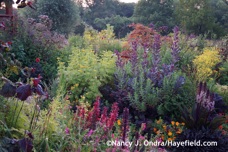 Garden in august in a garden - Front Garden At Dawn August 9 2014 At Hayefield Com