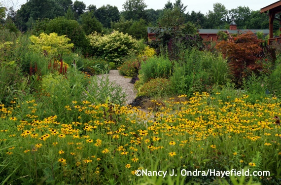 Front Garden ~ August 7, 2014 at Hayefield.com
