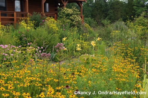 Side Garden ~ August 7, 2014 at Hayefield.com
