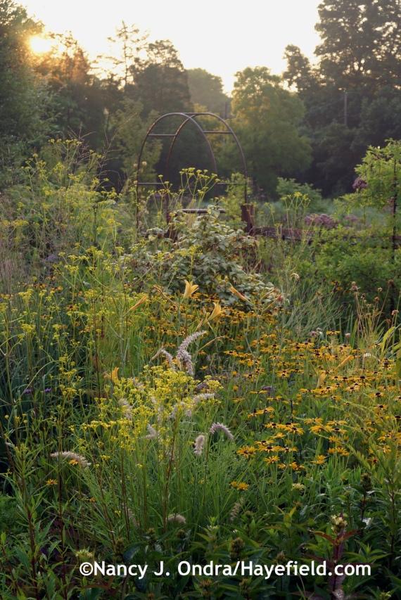 Side Garden ~ August 9, 2014 at Hayefield.com