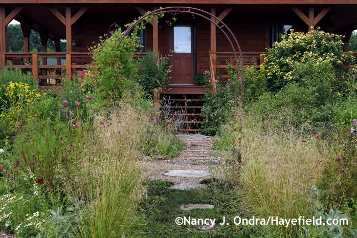 Tufted hair grass (Deschampsia cespitosa) in the Side Garden ~ August 7, 2014 at Hayefield.com
