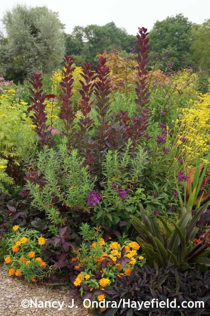Front Garden Detail at Hayefield.com