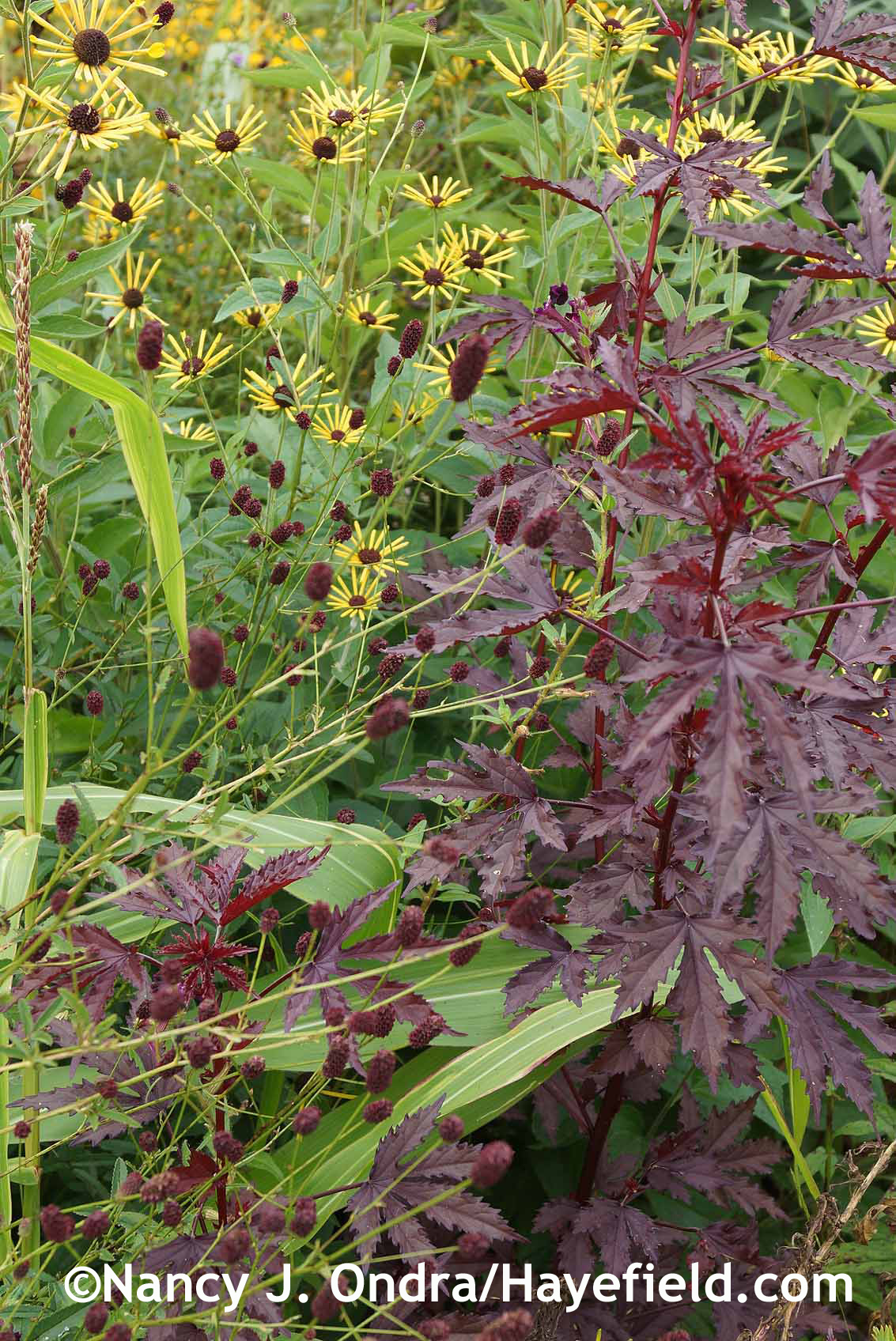 Three Neat Plants Hayefield