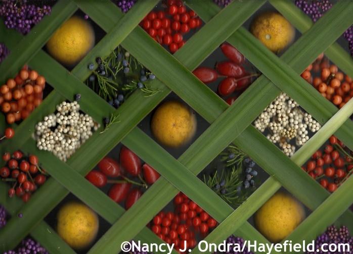 Autumn Fruits at Hayefield.com